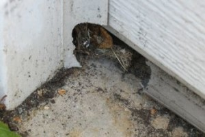 rodent_hole_garage_door